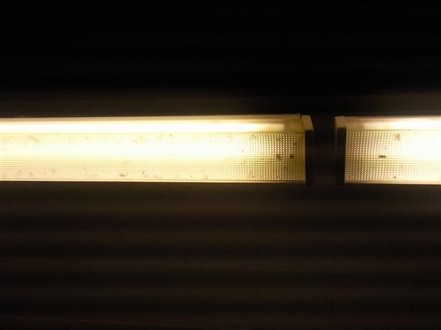Cubicle lights - with dead bugs still in